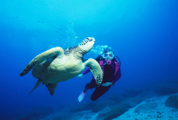Dive with Trutles in Tonga